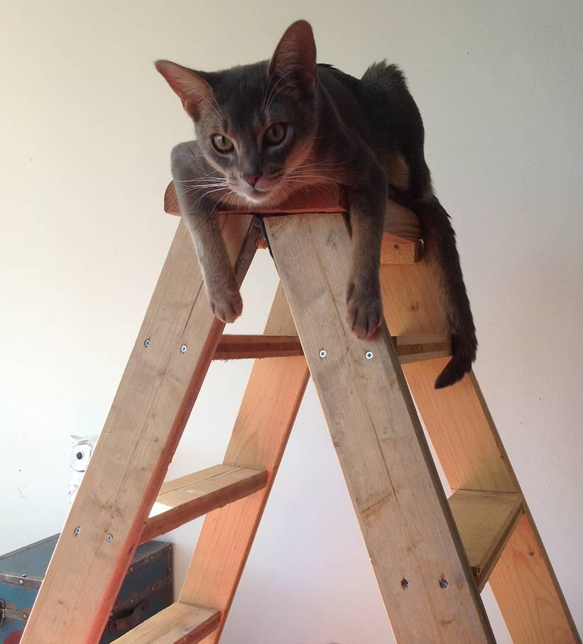 echelle a chat pour grimper luchelle mieux vaut soigner les de son chat fabrication duun. Black Bedroom Furniture Sets. Home Design Ideas